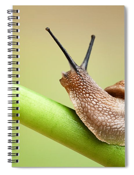 Snail On Green Stem Spiral Notebook