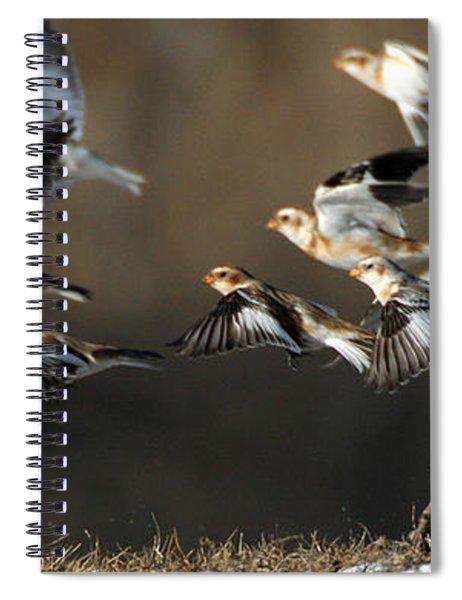 Snow Buntings Taking Flight Spiral Notebook