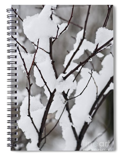 Snow Covered Branches Spiral Notebook by Elena Elisseeva
