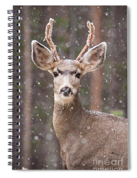 Snow Deer 1 Spiral Notebook
