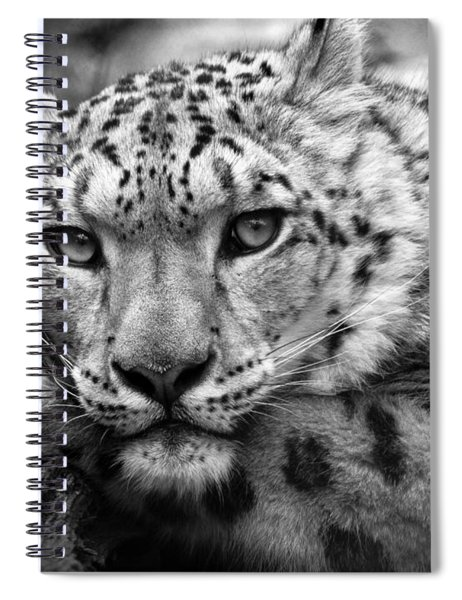 Snow Leopard In Black And White Spiral Notebook