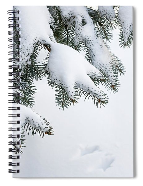 Snow On Winter Branches Spiral Notebook