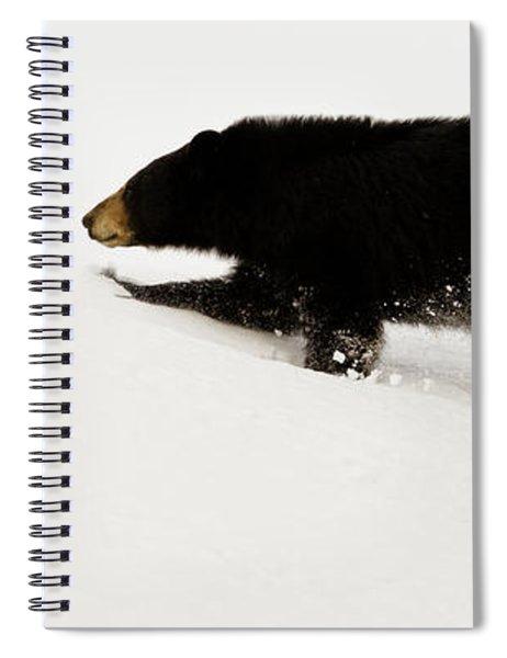 Snowy Bear Spiral Notebook