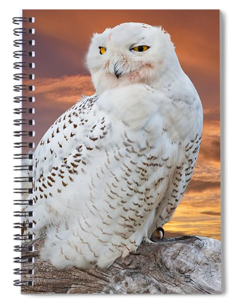Snowy Owl Perched At Sunset Spiral Notebook