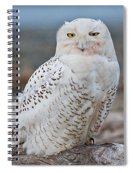 Snowy Owl Watching From A Driftwood Perch Spiral Notebook