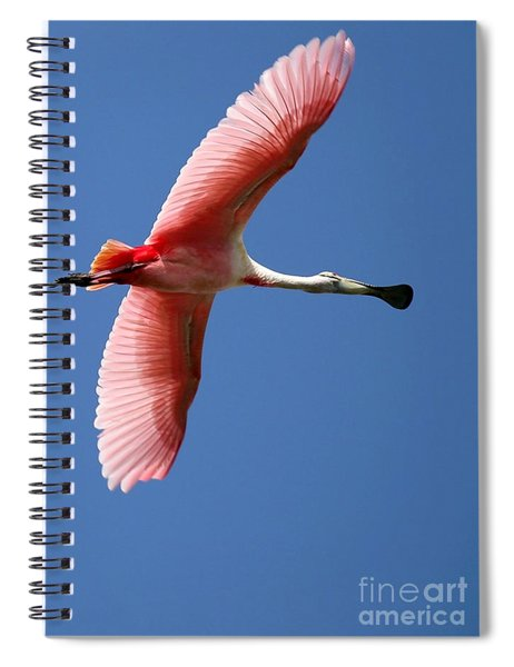 Soaring High Roseate Spoonbill Spiral Notebook