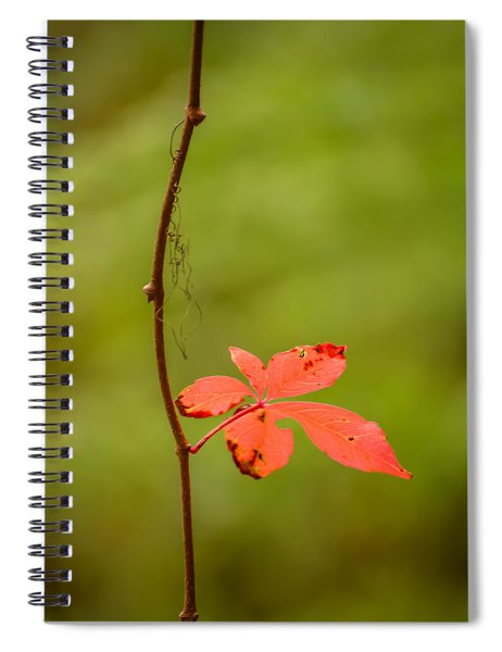 Solitary Red Leaf Spiral Notebook