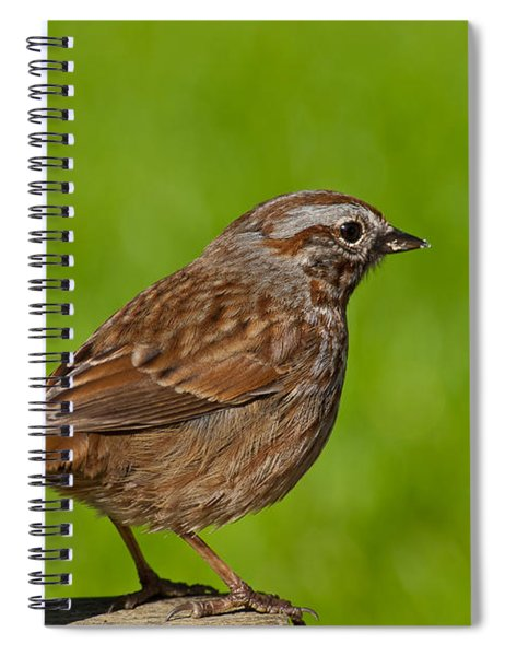 Song Sparrow On A Log Spiral Notebook