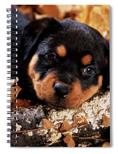 Sorrowful Rottweiler Puppy Lying Spiral Notebook
