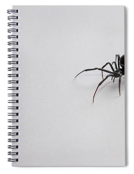 Southern Black Widow Spider Spiral Notebook