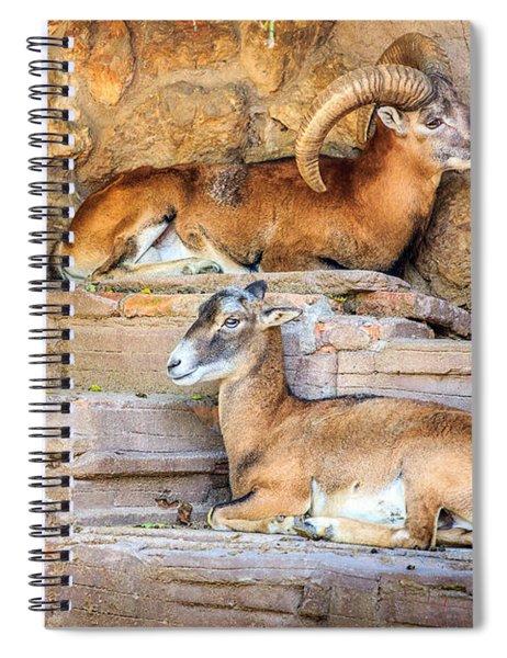 Spanish Ibex Spiral Notebook