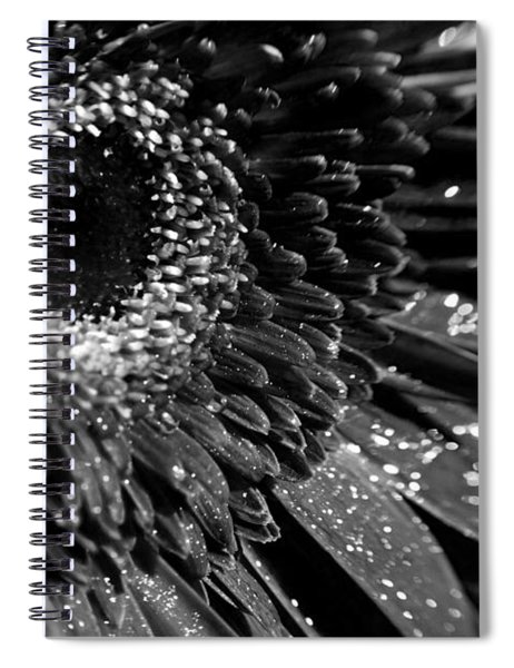 Sparkling Gerbera In Monochrome Spiral Notebook