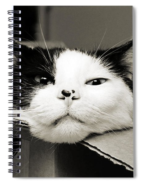 Special Delivery It's Pepper The Cat  Spiral Notebook