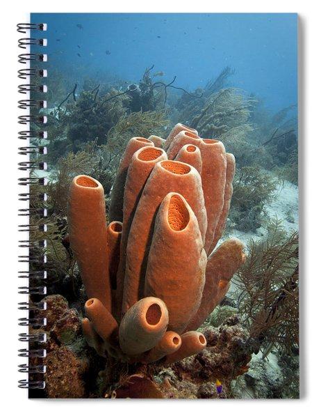 Sponge Bath Spiral Notebook