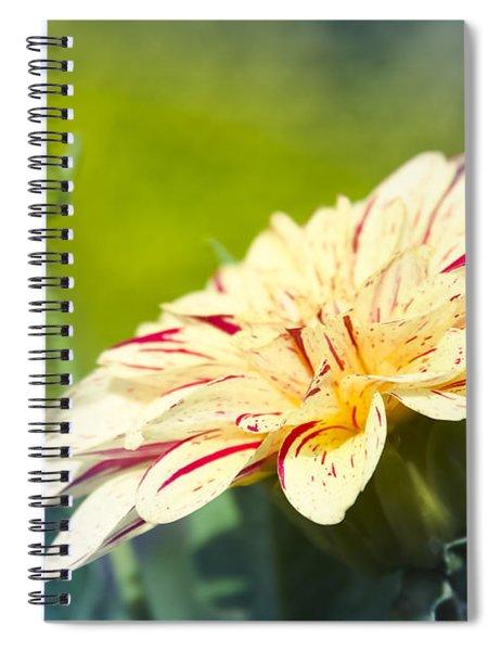 Spring Dream Jewel Tones Spiral Notebook