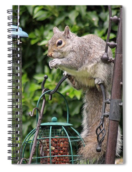 Squirrel Eating Nuts Spiral Notebook
