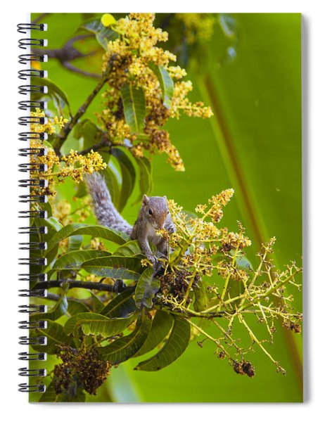 Squirrel In A Tree Spiral Notebook