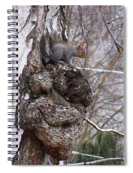 Squirrel On A Burl Spiral Notebook