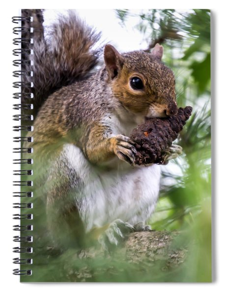Squirrel With Pine Cone Spiral Notebook