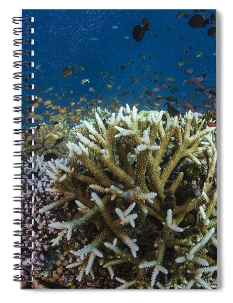 Staghorn Coral And Fish Koro Island Fiji Spiral Notebook