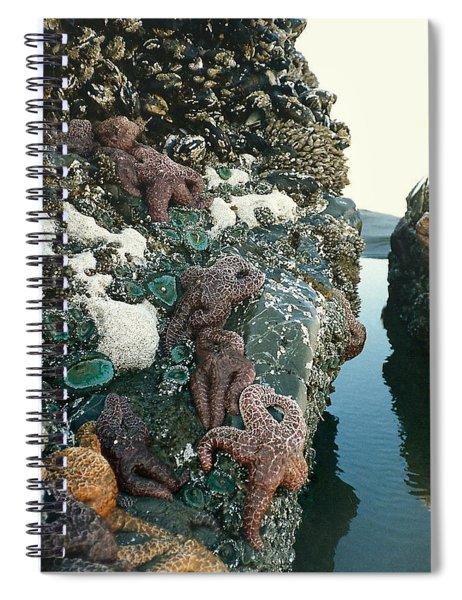 Starfish  Spiral Notebook