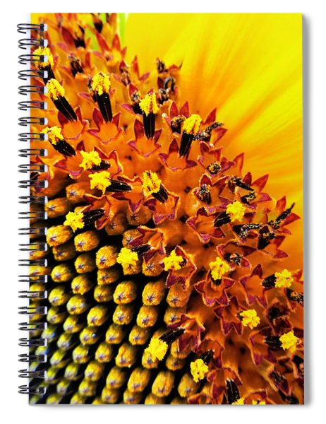 Stars Of The Sun Spiral Notebook