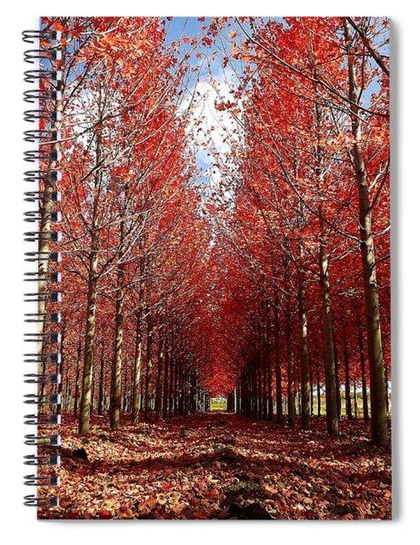 Stay Spiral Notebook