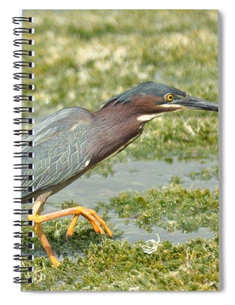 Still Looking Spiral Notebook