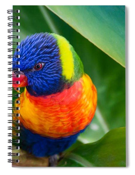 Striking Rainbow Lorakeet Spiral Notebook