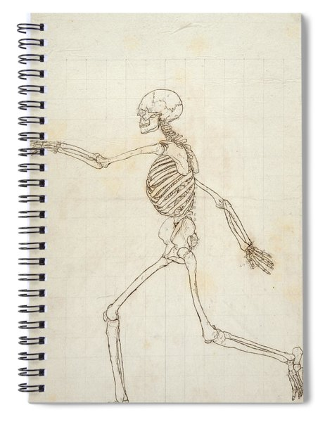 Study Of The Human Figure, Lateral View, From A Comparative Anatomical Exposition Of The Structure Spiral Notebook