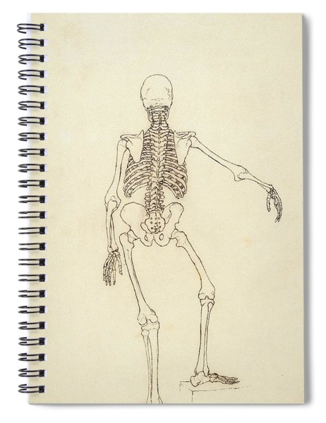 Study Of The Human Figure, Posterior View, From A Comparative Anatomical Exposition Spiral Notebook