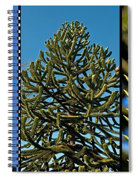Study Of The Monkey Puzzle Tree Spiral Notebook