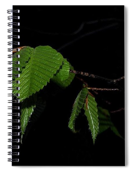 Summer Leaves On Black Spiral Notebook