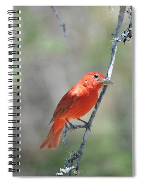 Summer Tanager Spiral Notebook