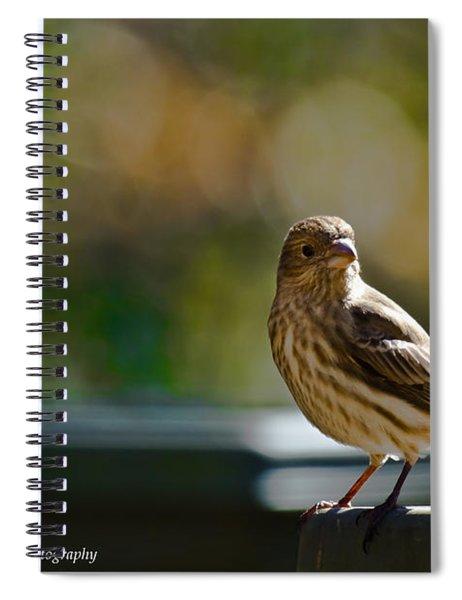 Spiral Notebook featuring the photograph Sun Bathing by Robert L Jackson