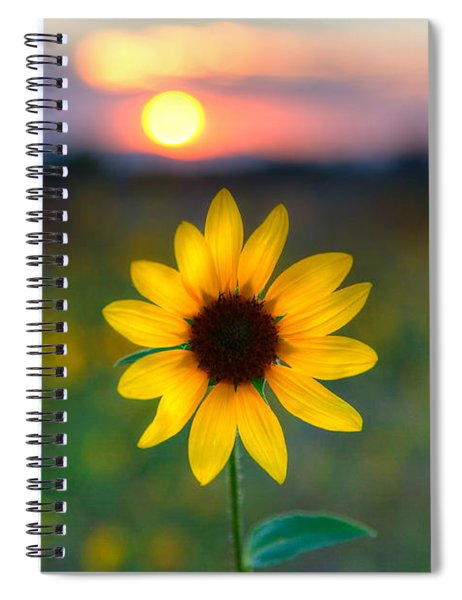 Sun Flower Iv Spiral Notebook