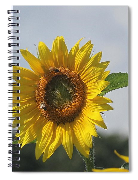 Sunflower 5 Spiral Notebook
