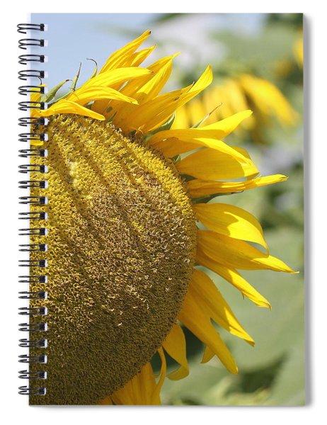 Sunflower 8 Spiral Notebook