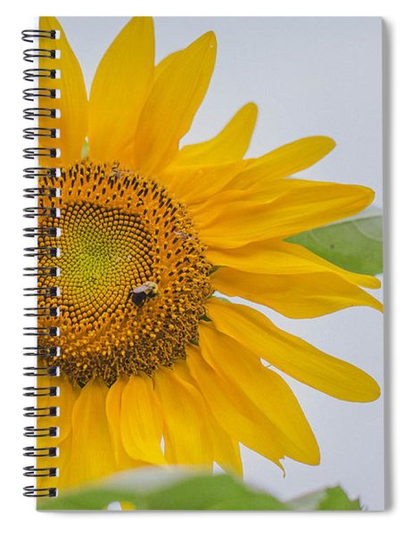 Sunflower And Bee Spiral Notebook
