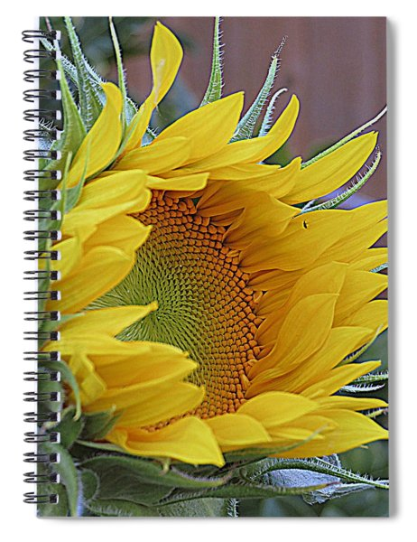 Sunflower Awakening Spiral Notebook