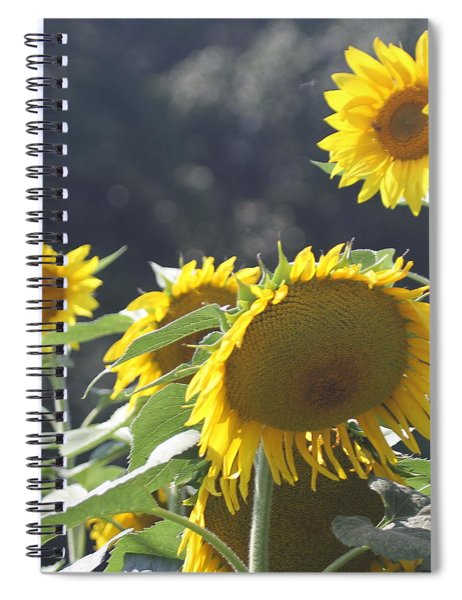 Sunflower Cluster 2 Spiral Notebook