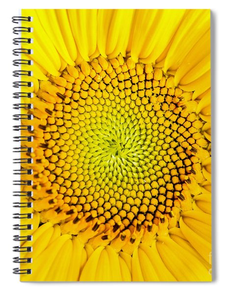 Sunflower  Spiral Notebook