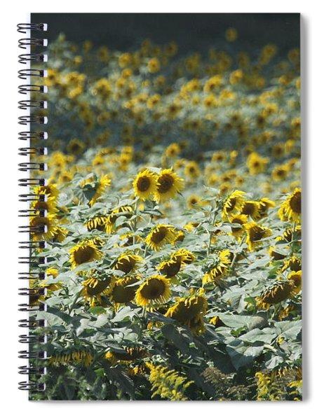 Sunflower Fields 8 Spiral Notebook