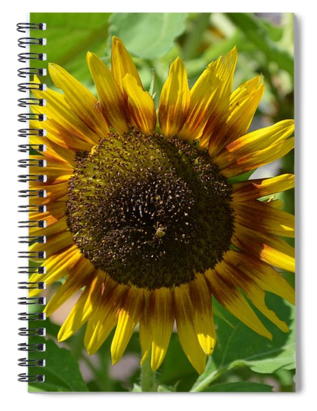 Sunflower Glory Spiral Notebook
