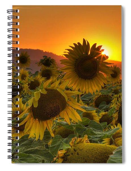 Sunflower Sun Rays Spiral Notebook