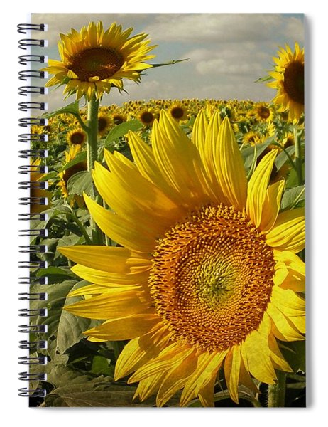 Kansas Sunflowers Spiral Notebook