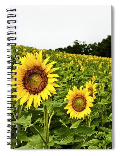 Sunflowers On A Hill Spiral Notebook