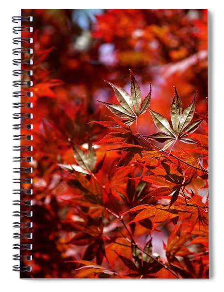 Sunlit Japanese Maple Spiral Notebook