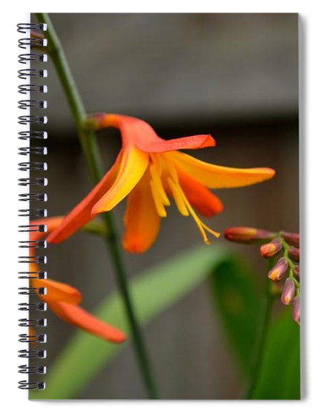 Spiral Notebook featuring the photograph Sunny Crocosmia by Scott Lyons