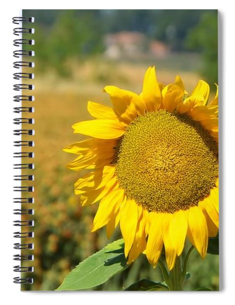 Sunny Sunflower Fields Spiral Notebook
